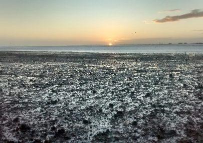 The Mud Flats