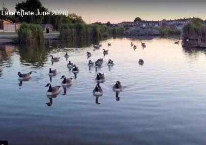 Canvey Lake June 2020