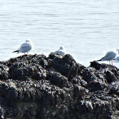 A few Seagulls by the Thames | © Janet Penn