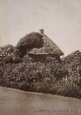 A very overgrown Dutch cottage but the birds house is still in view - Stamped 1912 - Canvey Island | David Bullock