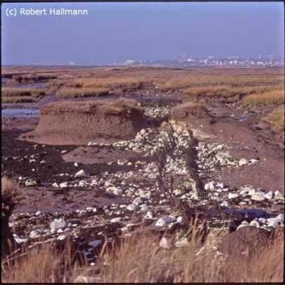 Canvey Point - Old Dutch Sea Wall | Robert Hallmann (Slide)
