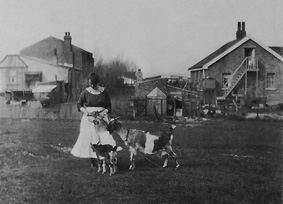Joan's mother-in-law Alice Ogg with the plotland goats.