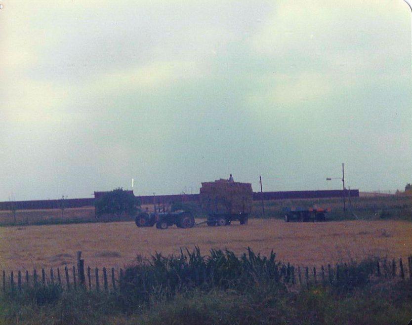 Hay Making at Thorney Bay