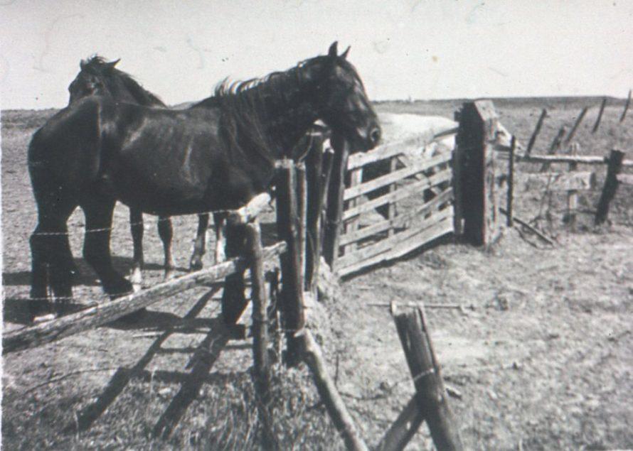 Bill Cass' Horses