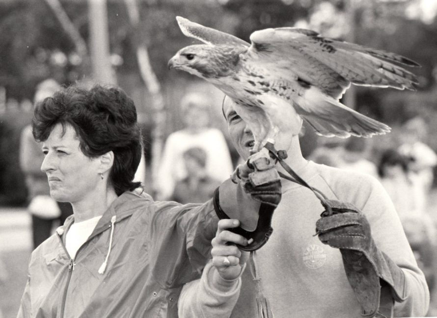 Falconry Display | Echo Newspaper Archive
