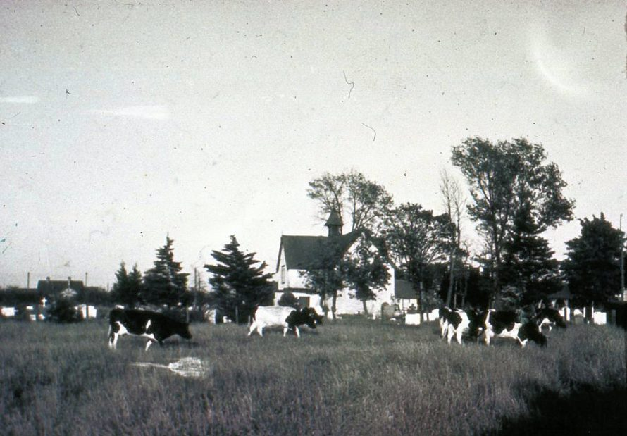 Fresian Herd on Charfleets Farm with the Church in the background. | Janet Dolling