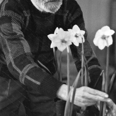 Horticultural Society Spring show at teh War Memorial Hall 1991. Ken Dorling arranging his blooms.   Echo Newspaper Group