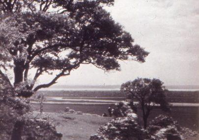 Horace Reeds Photos