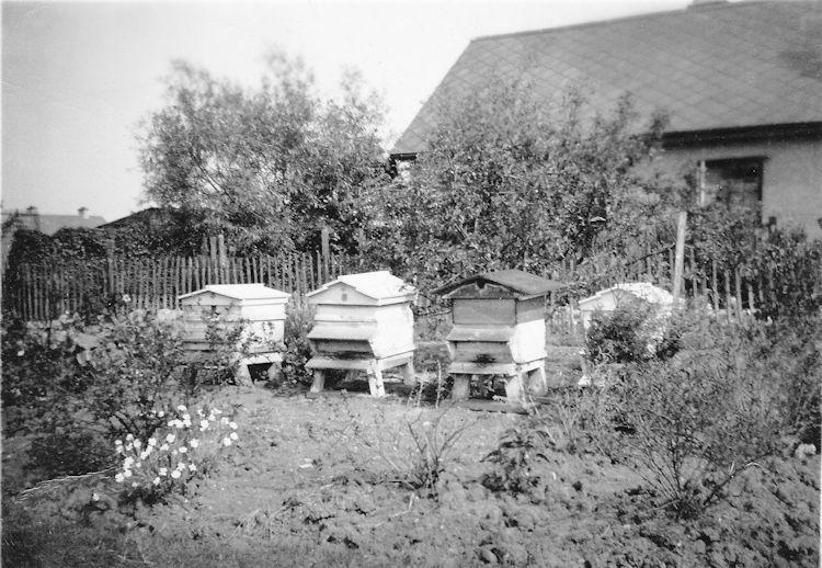 Bob Jenning's beehives in Village Drive | Joyce Cowell