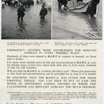 RSPCA leaflet issued in the wake of the 1953 floods to raise much needed cash | RSPCA