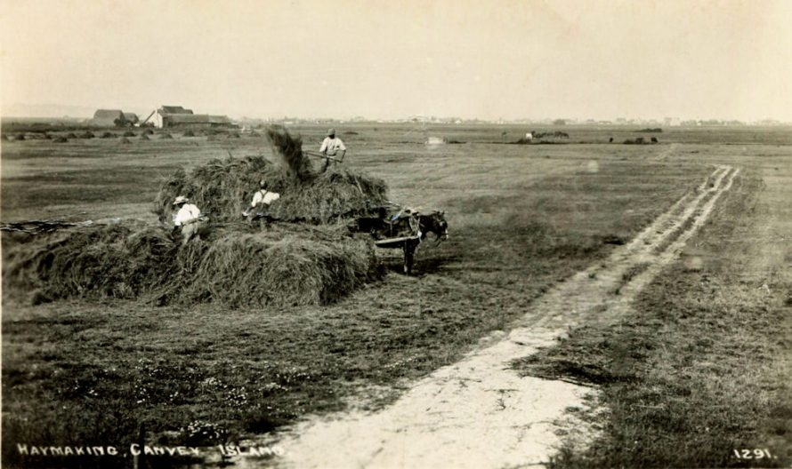 Haymaking Canvey
