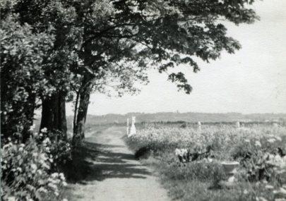 Path across the Churchyard 1930s/40s