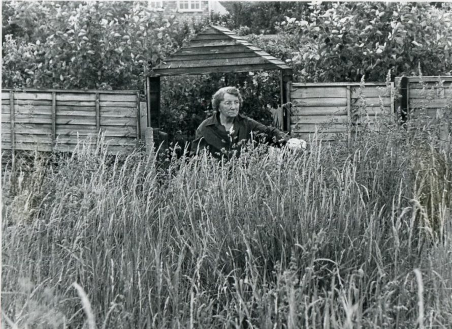 Weeds and more Weeds | Echo Newspaper Archive