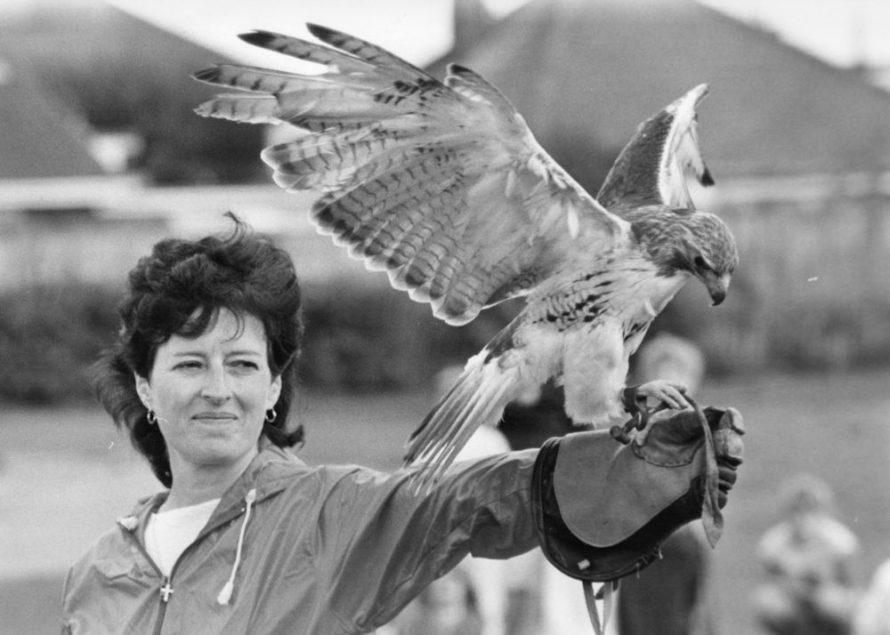 Red Tail Hawk on the arm of Pat Hewitt. | Echo Newspaper Group
