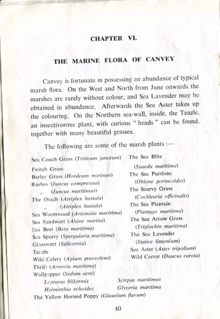 The Marine Flora of Canvey