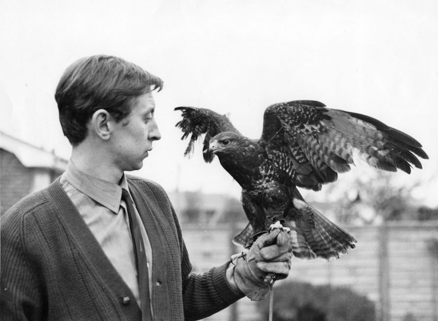 Derek Nash and his pet Buzzard Sheba | Echo Newspaper Group