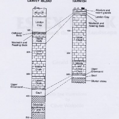 The results of the Canvey and Harwich boreholes. Shows variations in the thickness of each geological formation across the country. The depth below ground level is shown in metres on the left | Illistration by Clive Walpole