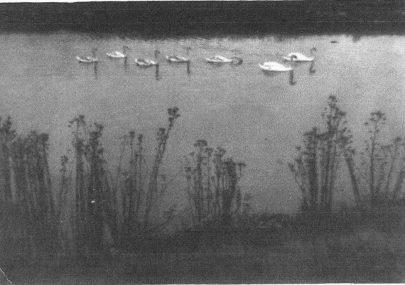 Croppenburg Lake and Island Farm