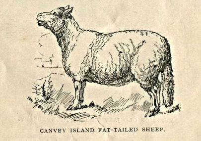 05 - History of Canvey Island 1901