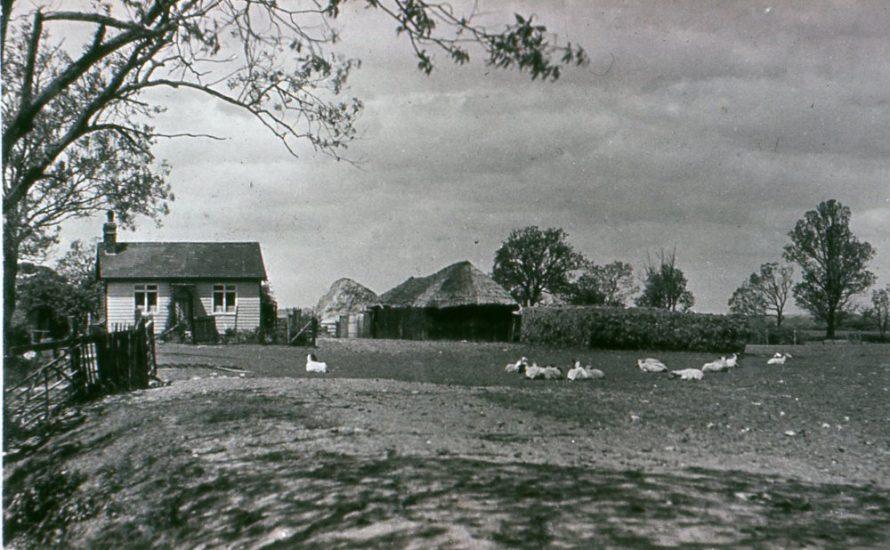 Mye Little Farm