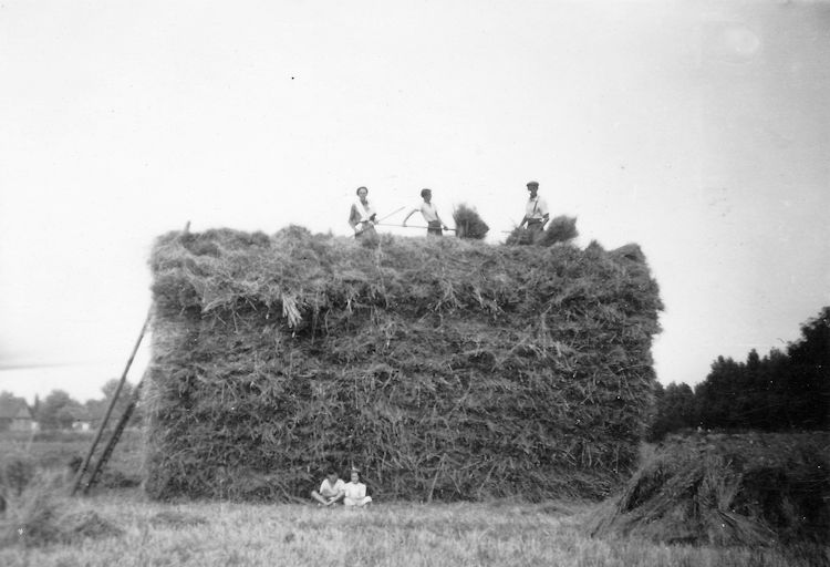 Busy building a haystack with the hay brought by the haywain. A reminder of this is to be found in the name of the Haystack pub on the corner of Long Road and Furtherwick Road. | Joyce Cowell