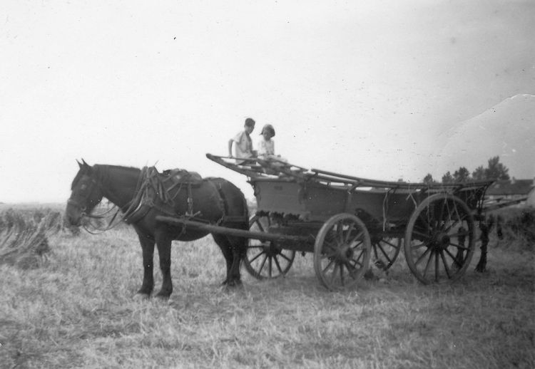 Well before the advent of tractors a horse-drawn haywain | Joyce Cowell