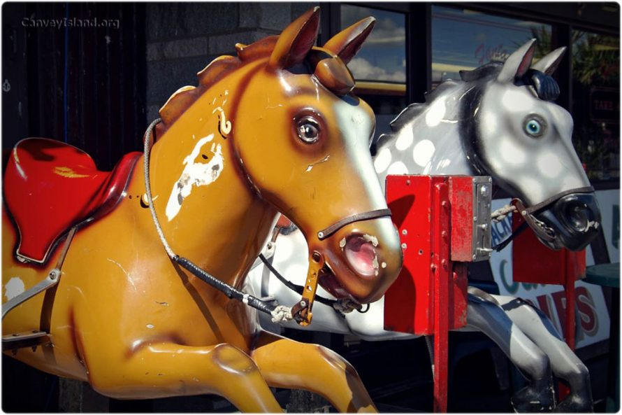 Casino Horses - Your Photos | Julieanne Savage