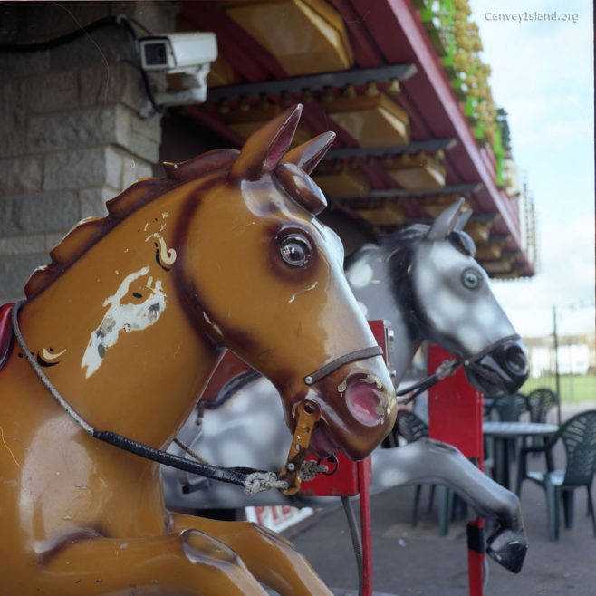 Casino Horses - Your Photos | Mark aka luns spluctrum