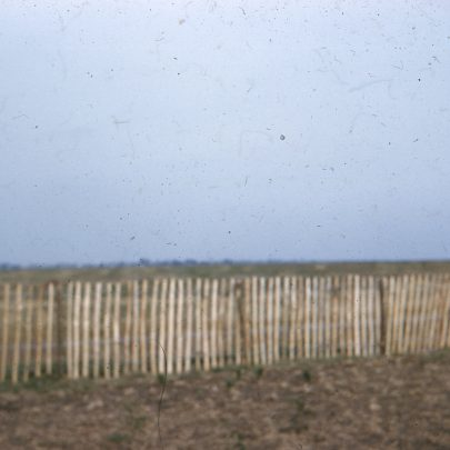 Planting 1962 | Aubrey Stevens