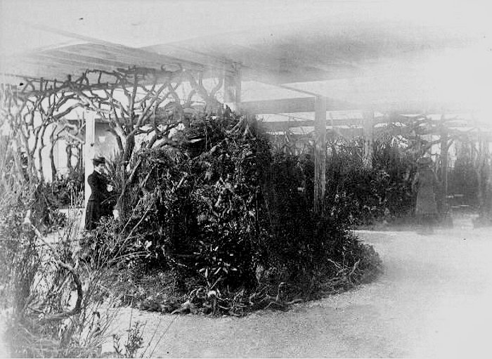 Inside Hester's Winter Gardens